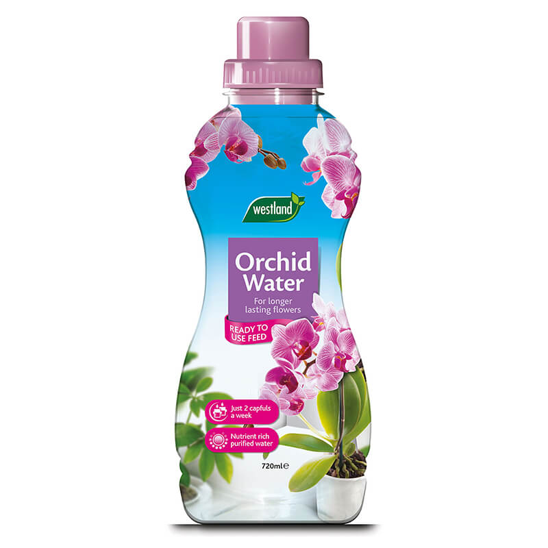 Orchid Water