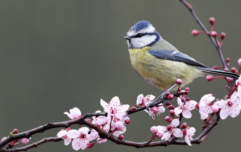 Birdcare and Wildlife Department Ruxley Manor