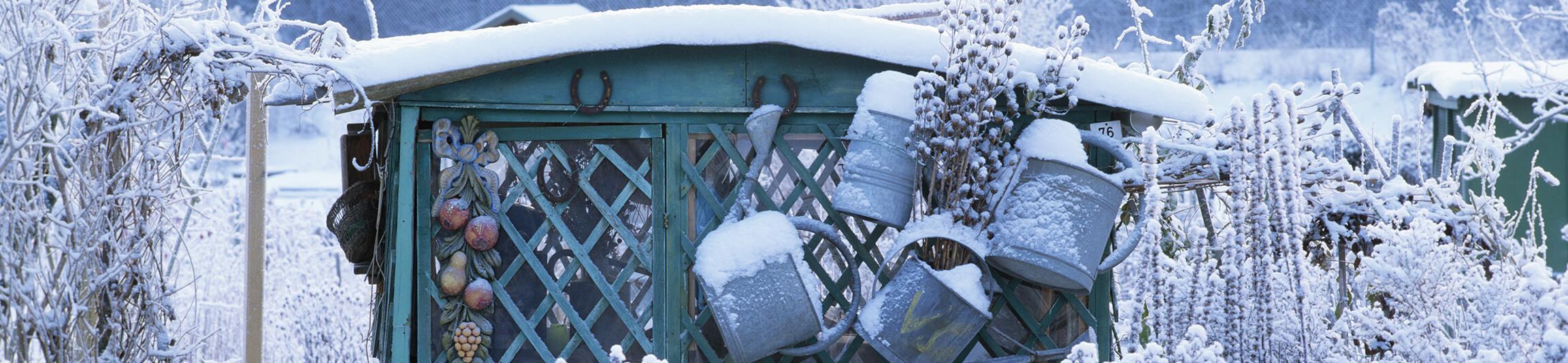 January Gardening Guide