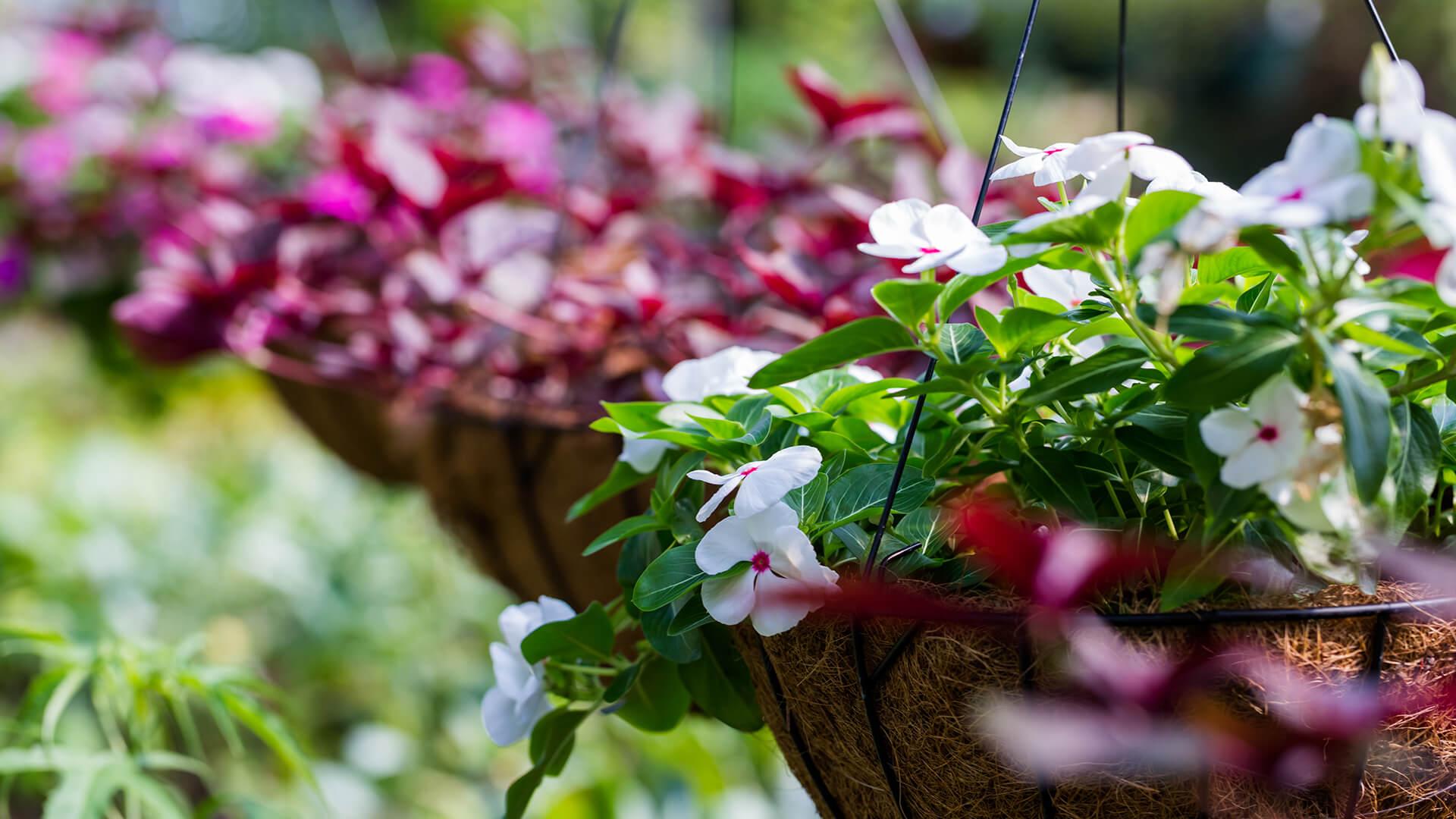 June Gardening Guide