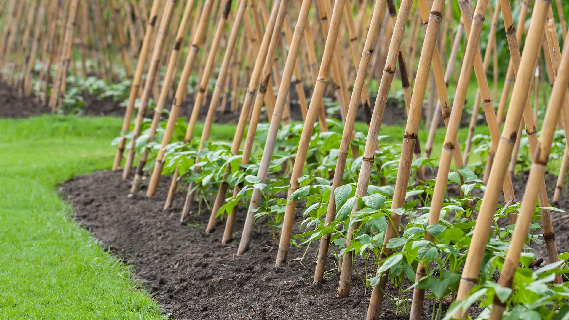 May Gardening Guide