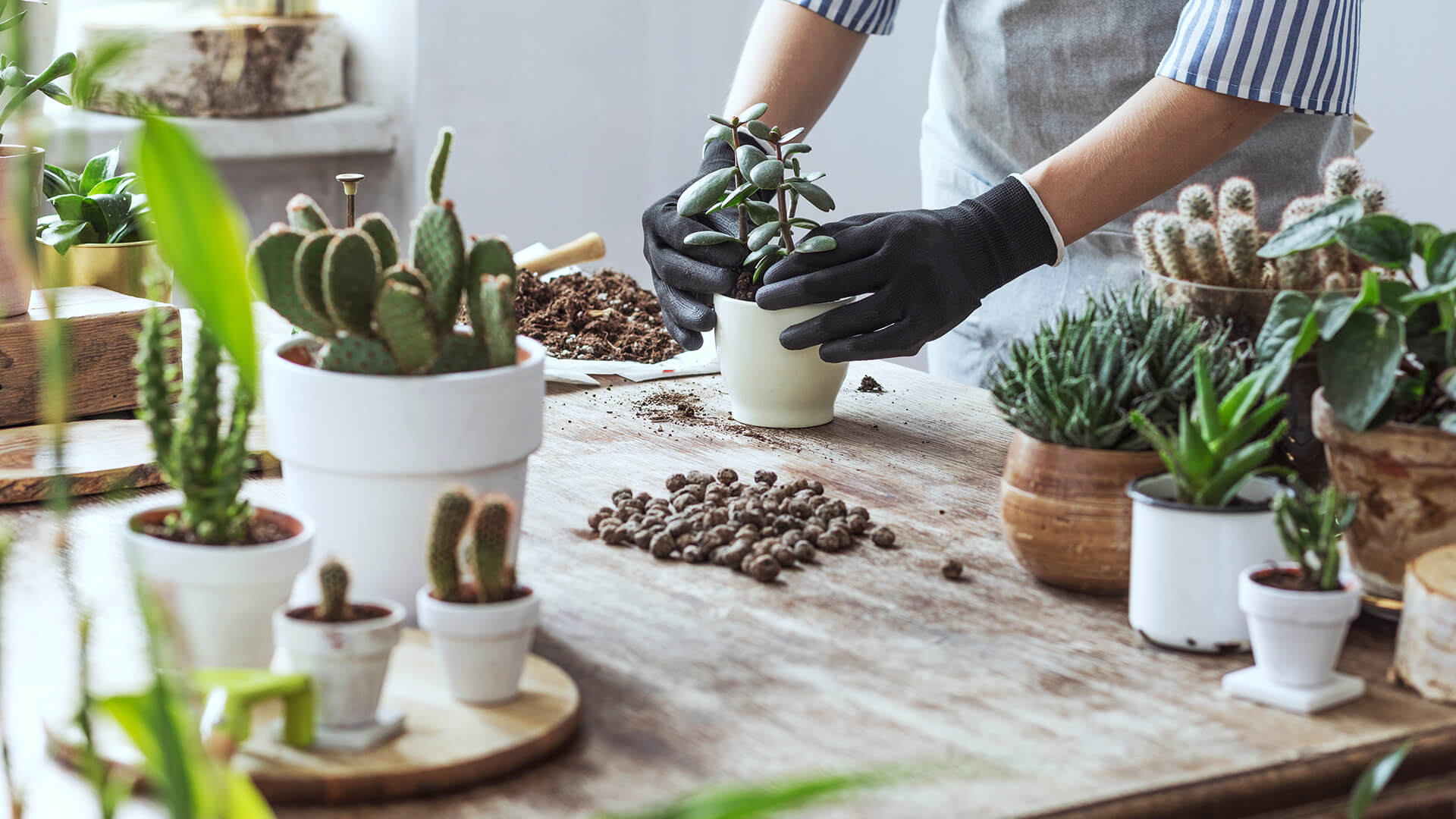 Cacti and Succulant Care Guide