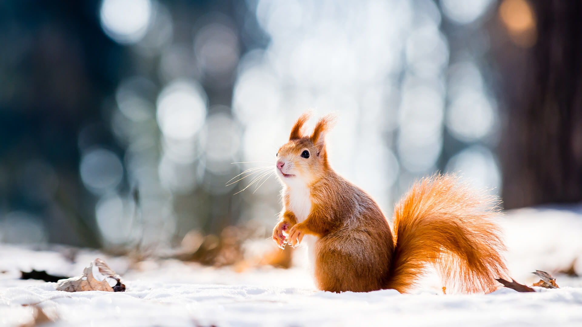 December Wildlife Guide