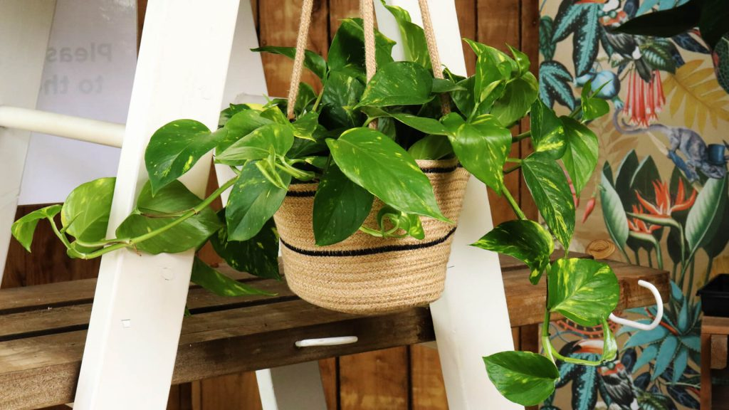 Win a Houseplant from Ruxley Manor