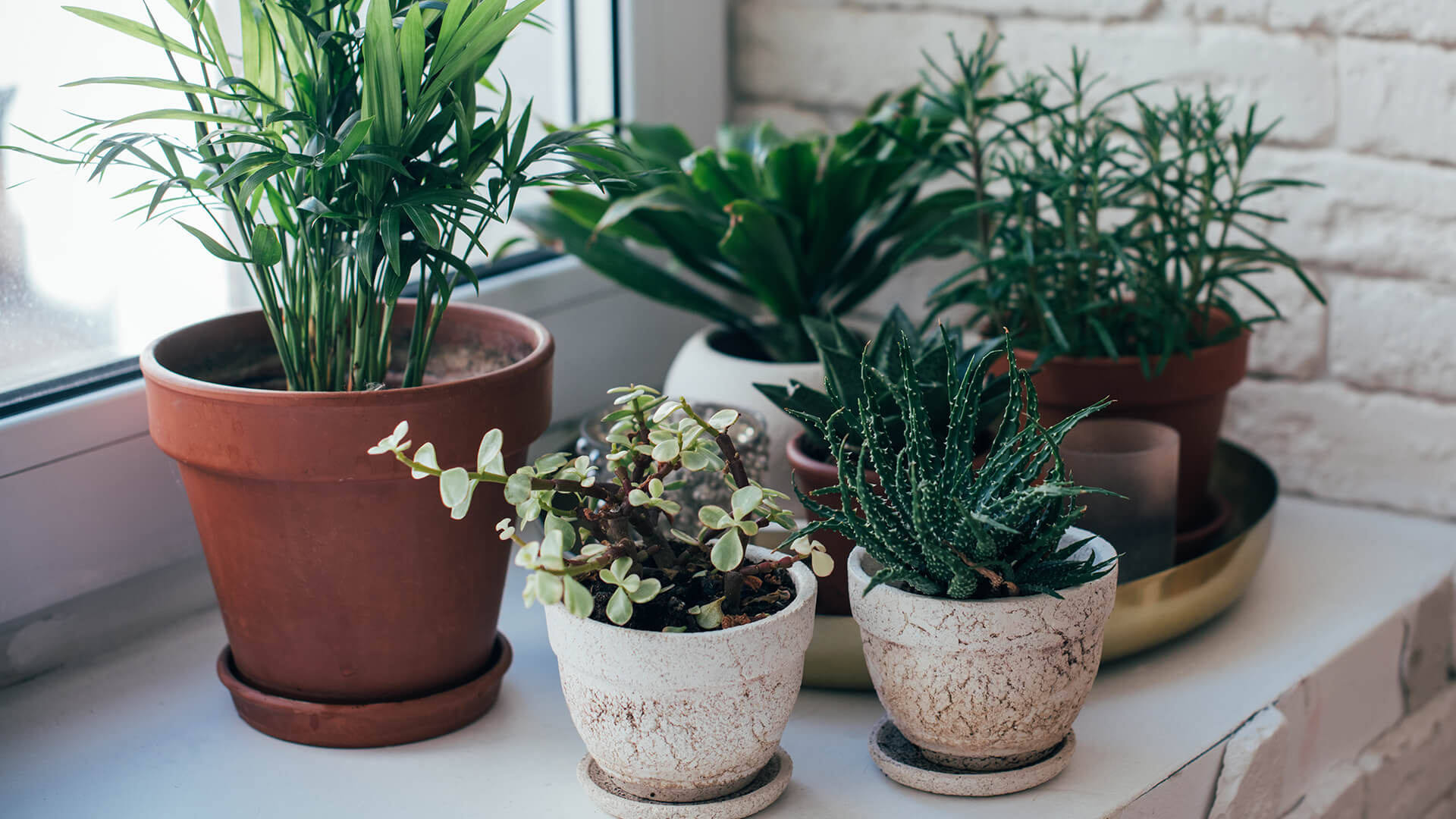 House Plant Care Guide
