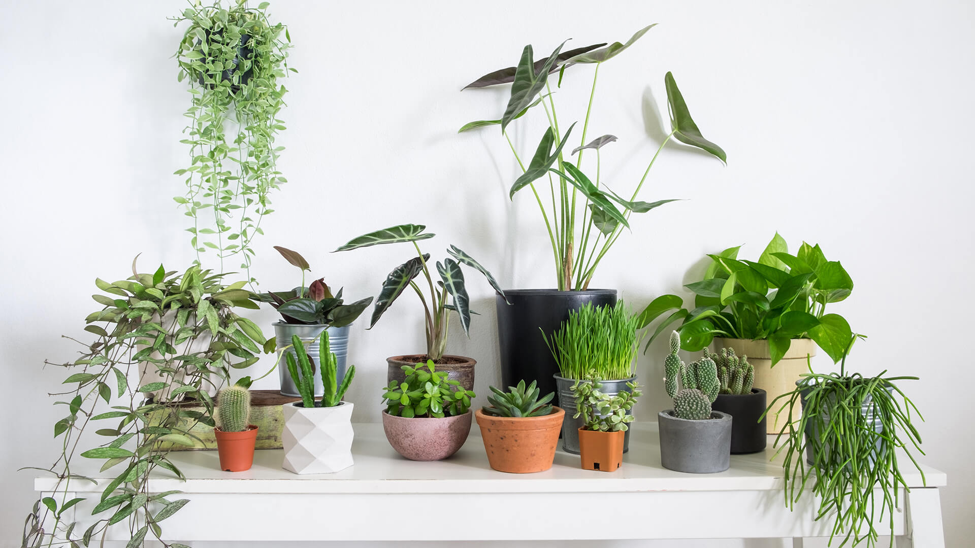 How to care for your houseplants