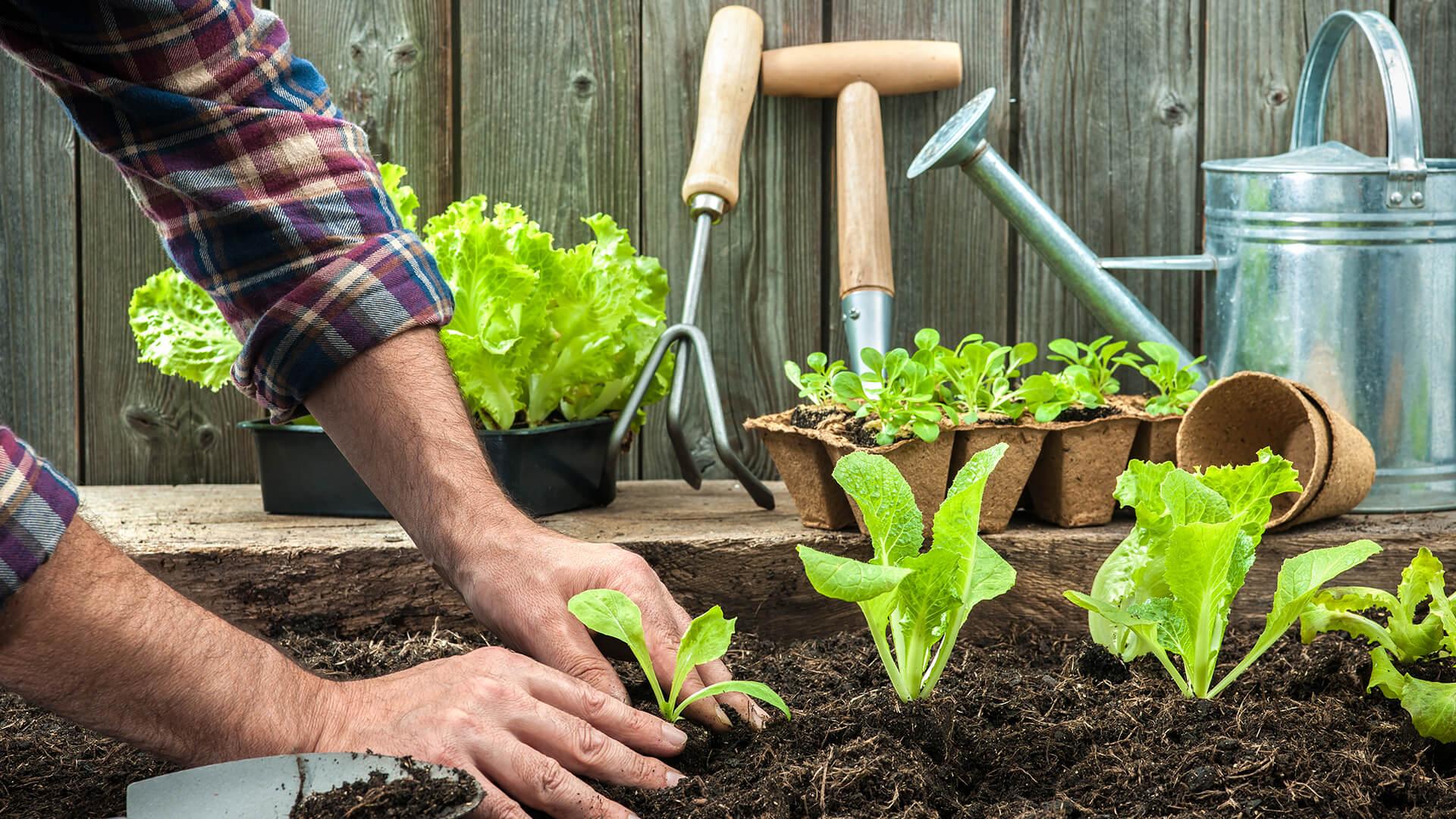 July Gardening Guide