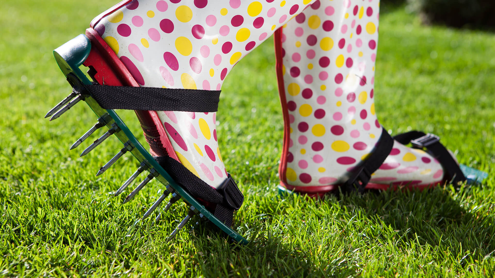 How to look after your lawn