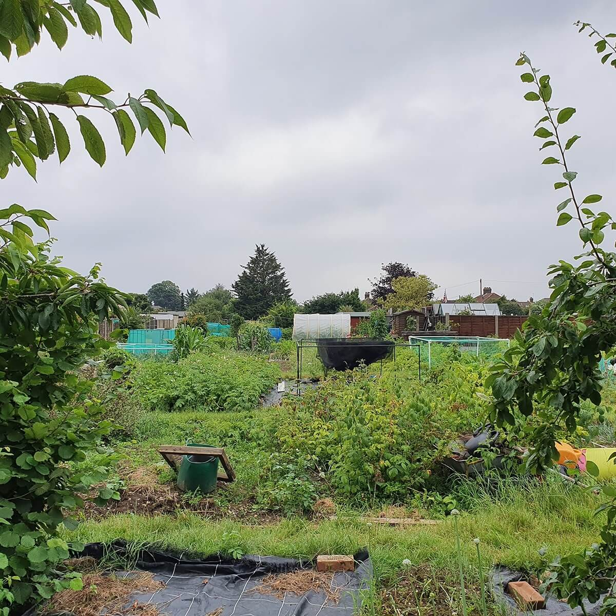 Best Allotment Site Ruxley in Bloom