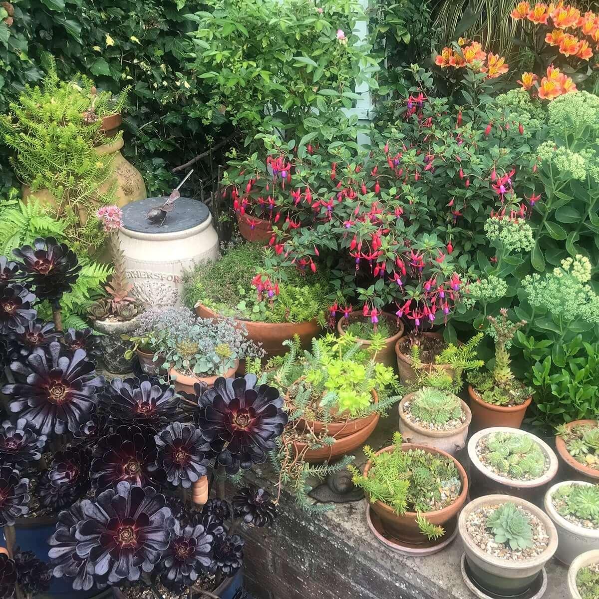 Best Back Garden Ruxley in Bloom